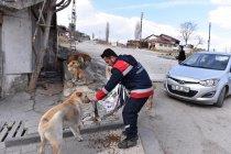 Ankara Büyükşehir Belediyesi, sokak hayvanlarına mama desteğini sürdürüyor