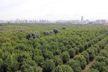 30 bin narenciye ağacının olduğu bölgeye sanayi sitesi