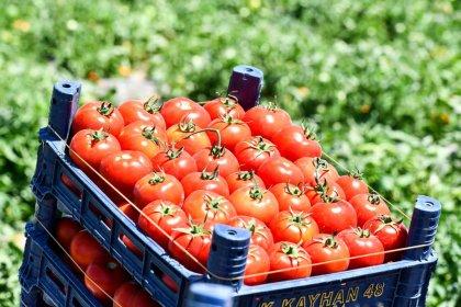 8 milyon sebze fidesi Ankaralı çiftçi ile buluşuyor