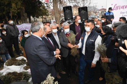 Adana Büyükşehir Belediyesi Pozantı'da 80 bin lavanta fidesi daha dağıttı