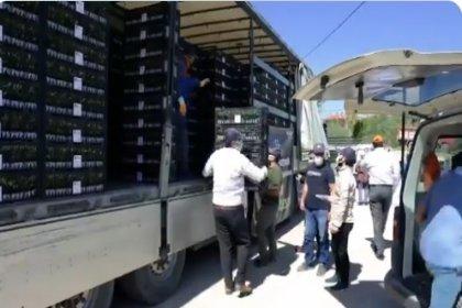 Ankara'da 8 milyon sebze fidesi dağıtımı başladı