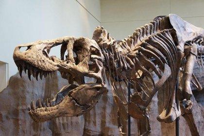 Araştırma: Dünyada 2.5 milyar T-rex dinozor türü yaşamış olabilir