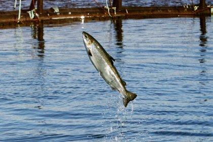 Araştırma: Su ekosistemlerine karışan uyuşturucular balıkları bağımlı yapıyor