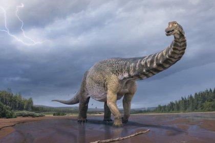 Avustralya'da yaşamış en büyük dinozor türlerinden biri keşfedildi