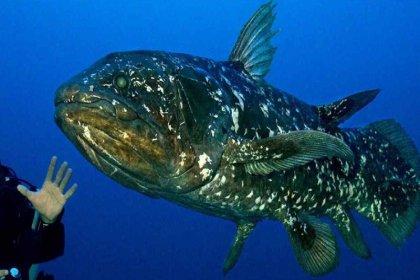 Bilim insanlarından yeni balık keşfi