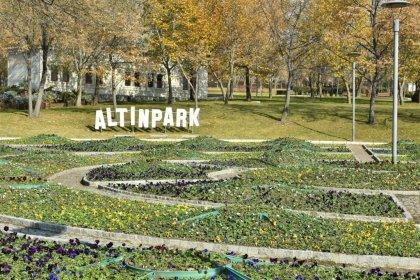 Büyükşehir Belediyesi, Ankara'yı rengarenk hercai menekşelerle donattı
