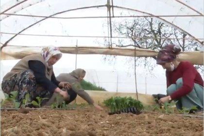 İBB'nin çiftçilere ücretsiz dağıttığı fidelerin ekimine başlandı