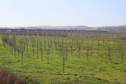 İSKİ, içme suyu havzalarını ağaçlandırıyor