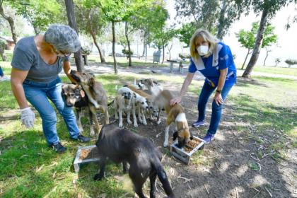 İzmir Büyükşehir Belediyesi, sokak hayvanları için 221 ton mama dağıttı