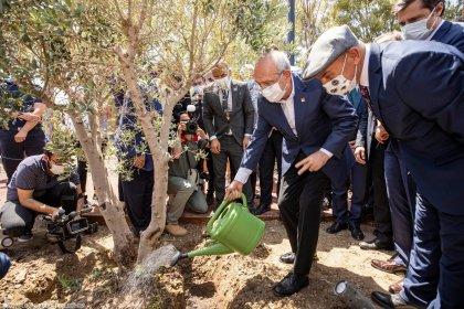 Kılıçdaroğlu İzmir'de ikinci zeytin ağacını dikti