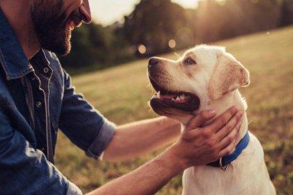 Köpekler, insanın kasıtlı ve kasıtsız eylemlerini ayırt edebiliyor