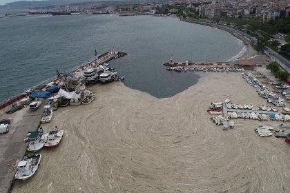 'Marmara Denizi öldü: Kanalizasyon gibi kullanılıyor, ekosistem çöktü'