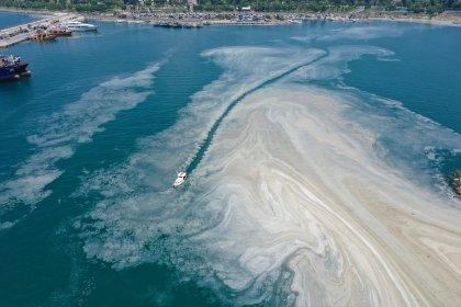 Marmara Denizi'ndeki tür çeşitliliği 250'den 21'e indi