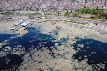 """""""Önlem alınmadığı için Marmara Denizi 'deniz salyaları' ile kaplandı"""""""