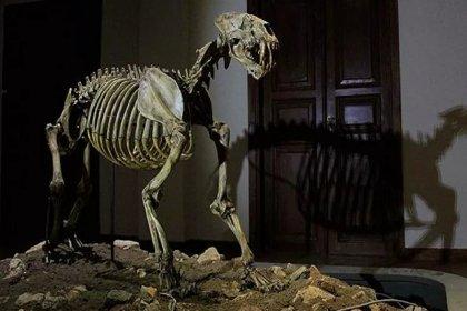Sibirya'da bulunan mağara aslanı yavrusu fosilinin en az 28 bin yıl önce yaşadığı keşfedildi