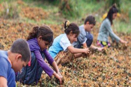 Son 8 yılda 513 çocuk çalışırken hayatını kaybetti