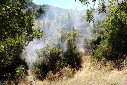 Spil Dağı'nda orman yangını
