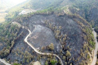 'Yanan ormanların ağaçlandırma yerine doğal yollarla gençleştirilmesi gerekiyor'