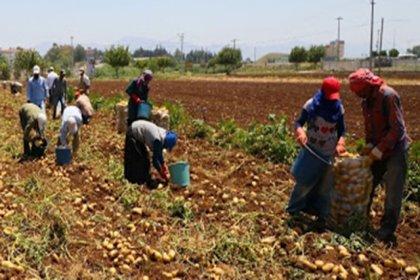 Yılın ilk 7 ayında en az 7 mevsimlik tarım işçisi öldü, 120'si de yaralandı